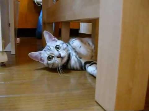 カメラ目線の子ネコ