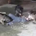 【閲覧注意】狼に食べられる人!