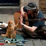 交通事故にあった猫を治療してあげたホームレスに舞い降りた幸運