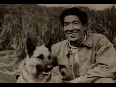 「ゆけ チャンピイ 奇跡の犬」 ~日本初の盲導犬・愛の物語~