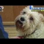 飼い主を探して入院中の病院に犬が現れる
