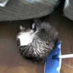 猫をモップ代わりに使う動画