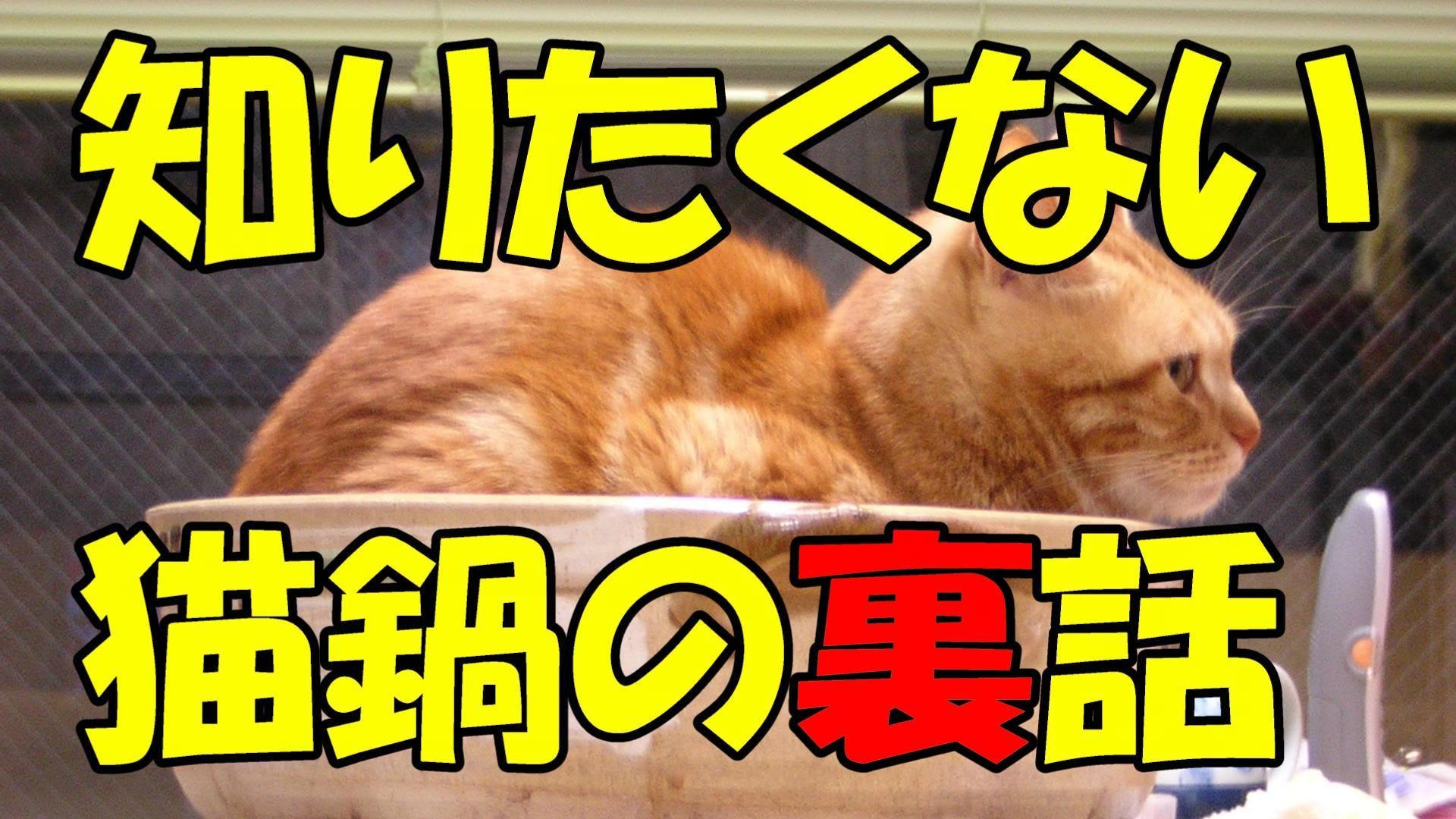【閲覧注意】韓国の猫鍋