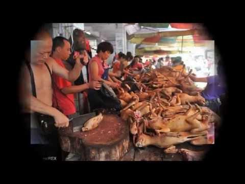 犬の肉を食べる祭り?!「犬肉祭」中国