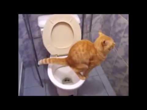 人間用のトイレでうんこをするネコ!