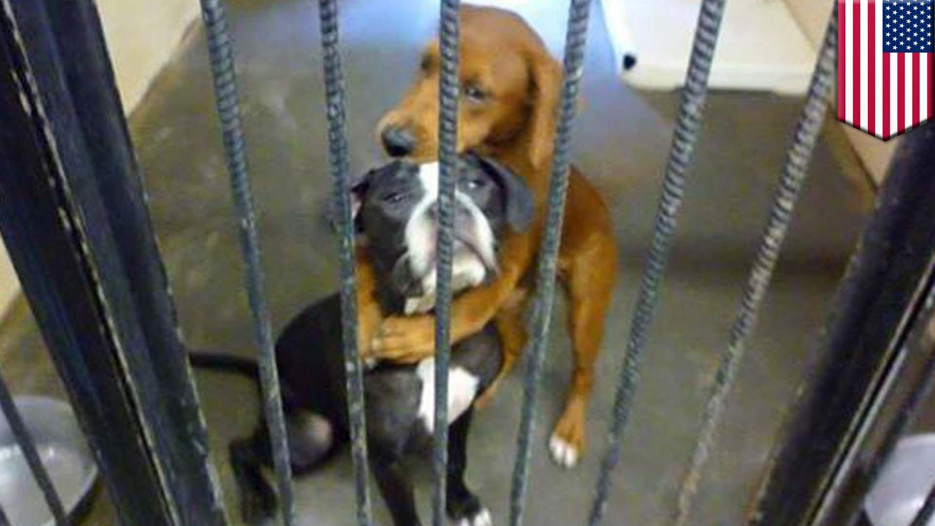 殺処分直前に撮られた「抱きつく犬」の写真に大きな反響が・・・