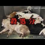 知られざる犬の殺処分の現実