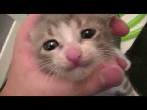 捨て猫を水責め?!