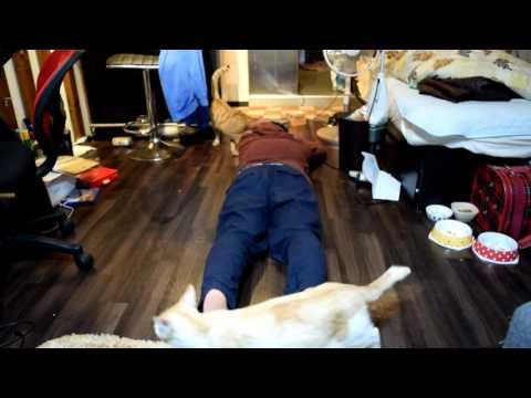 飼い猫の前で死んだふりをしてみた・・・(*^。^*)