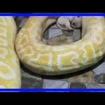 【中国】ニシキヘビのエサにされた子犬