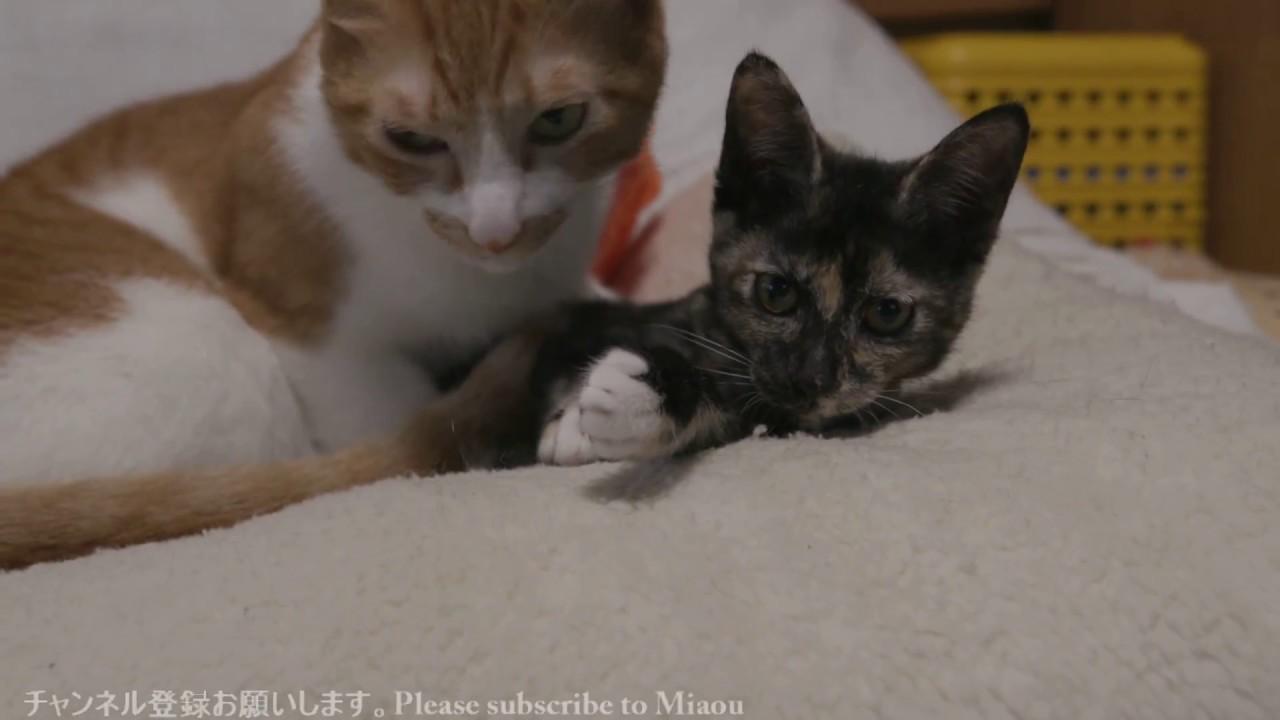 猫部屋ライブ映像!