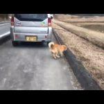 車で犬を散歩させるのは虐待なのか?!