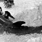 イルカと性交 NASAの女性
