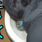 【閲覧注意】トイレの水を飲んでみた・・・