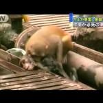 猿が猿を救出!