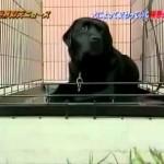 「極悪少年と捨てられた犬」 ザ!世界仰天ニュース