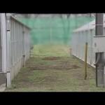 千葉県船橋市の県立高高校教諭が学校敷地内に猫生き埋め