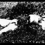 ブラック・ダリア事件(1947年)