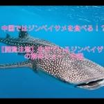 【閲覧注意】ジンベイザメの解体動画