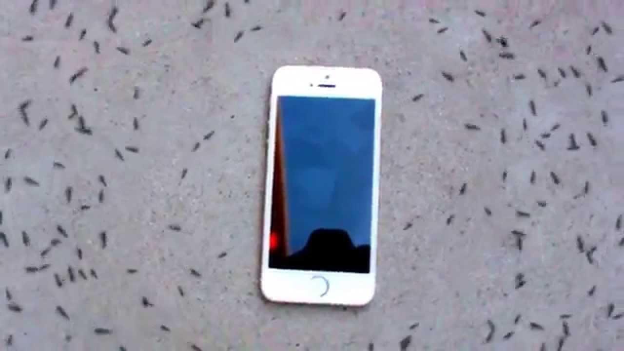 iPhoneの電磁波でアリが不思議行動?!