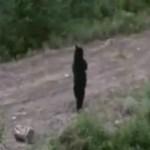 まるで人間!二足歩行するクマの衝撃映像!