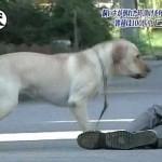 飼い主が突然倒れたとき、愛犬はどうする???