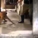 【超極悪】 犬を虐待する中国人や韓国人の動画 【閲覧注意】