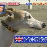 ボルト VS 犬