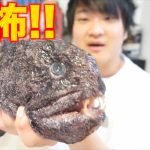 【ゴジラみたいな魚】 オオカミウオを食べてみた!