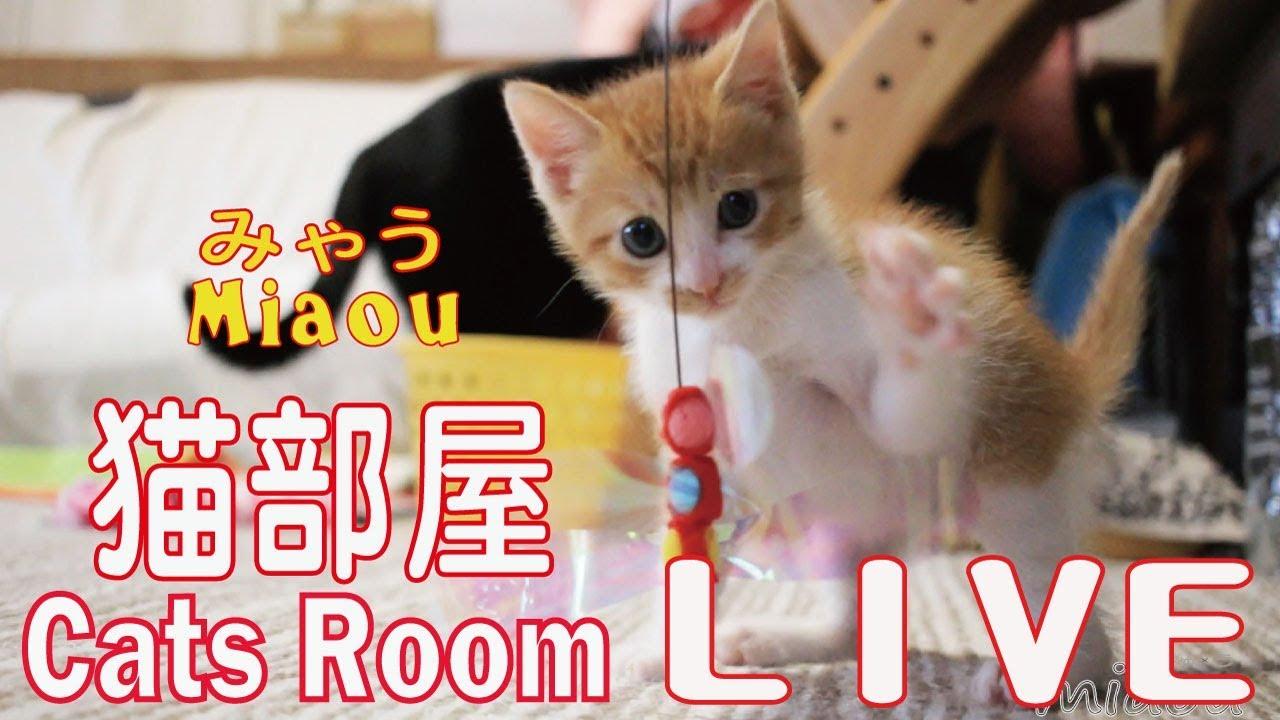 猫部屋ライブ映像
