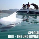 魚型水中ドローン「BIKI」潜水動画