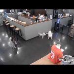 【韓国の犬カフェ】シベリアンハスキー犬に襲われたトイプードル ※閲覧注意!